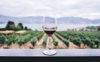 verre du vin devant les vignobles